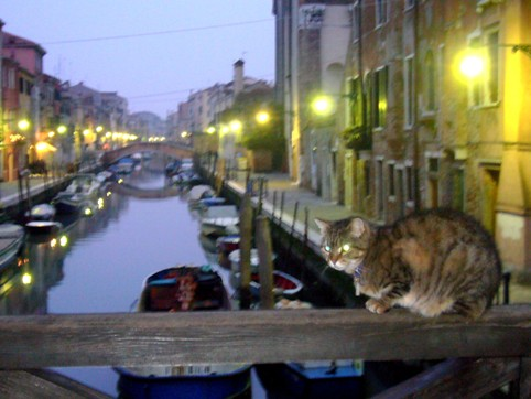 Blog cats in venice 2